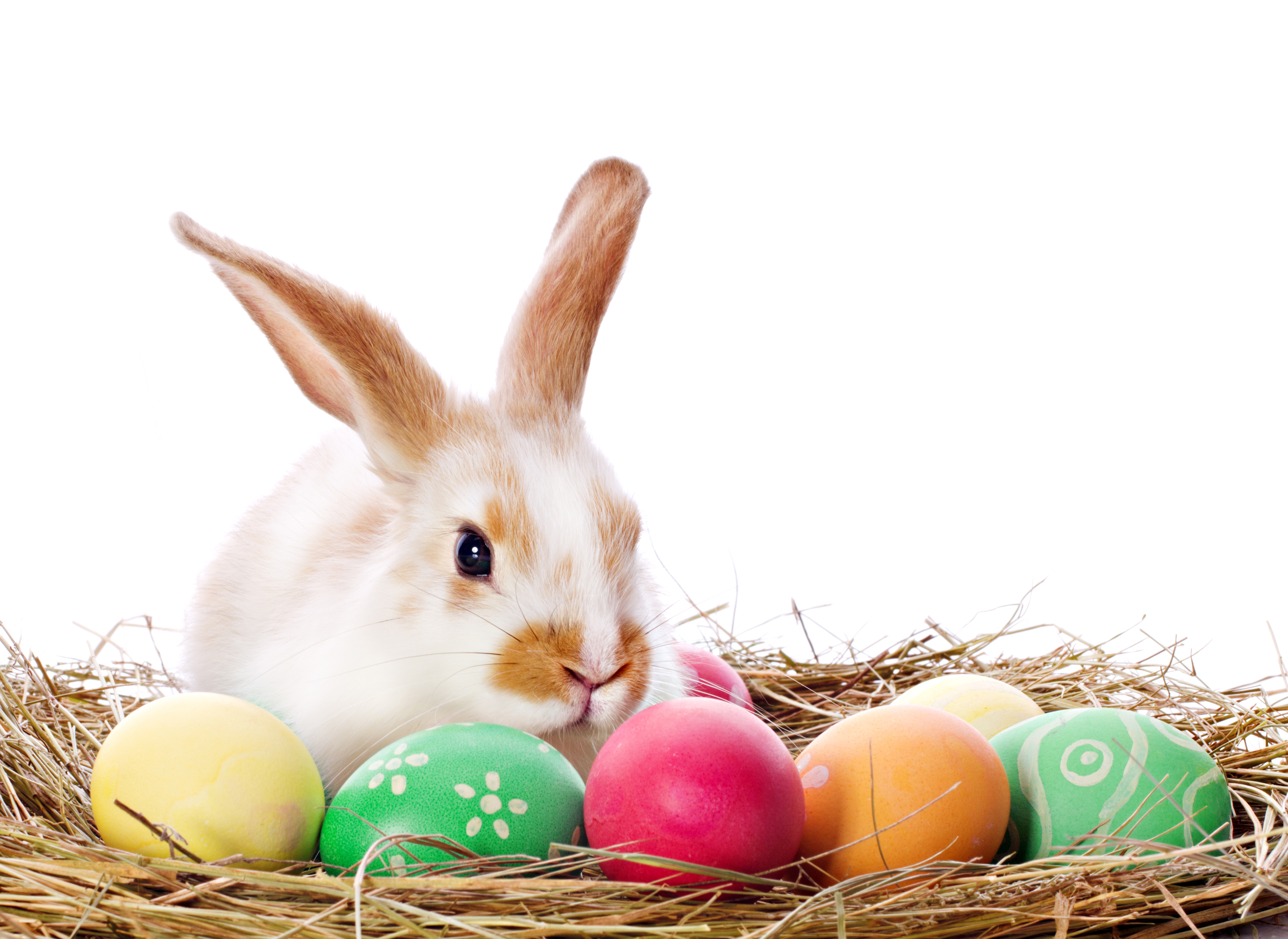 easter is a registered trademark cease and desist all uses